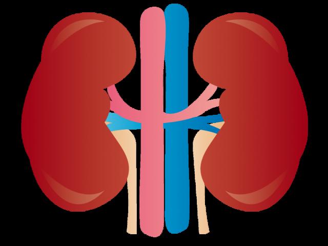 腎臓 二次高血圧 高血圧 色彩治療 表参道 外苑前